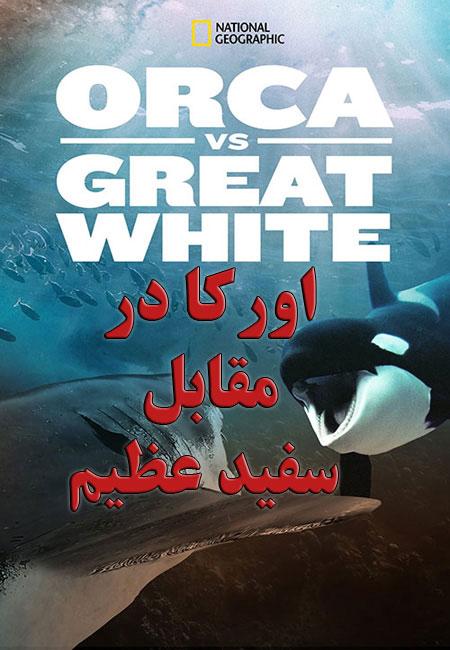 دانلود مستند اورکا در مقابل سفید عظیم Orca vs Great White 2021